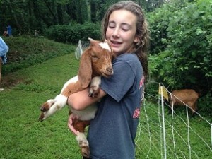 goats arrive 4.1